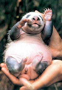 Xi Wang neonata