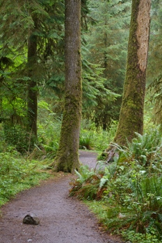 La Foresta di Forks